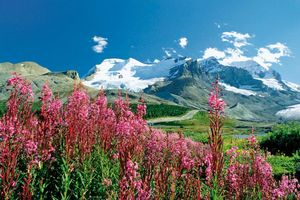 Icefield Parkway - Naturereignis Rocky Mountains - Kanada
