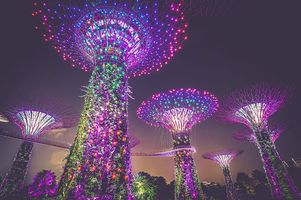 Supertrees des Gardens by the Bay bei Nacht - Singapur